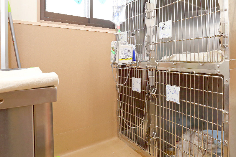 猫の入院室